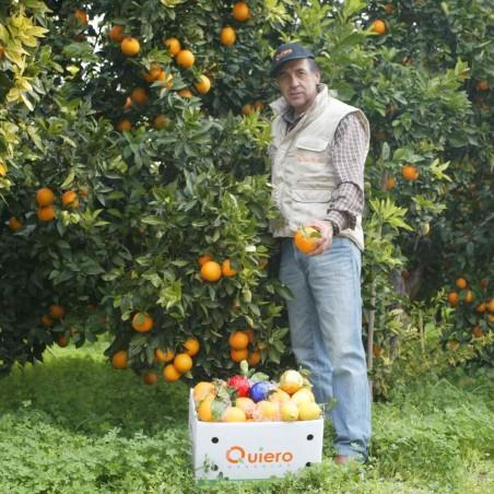 Oranges de Table 8 kg, Citrons 2 kg - 10 kg (écologiques)