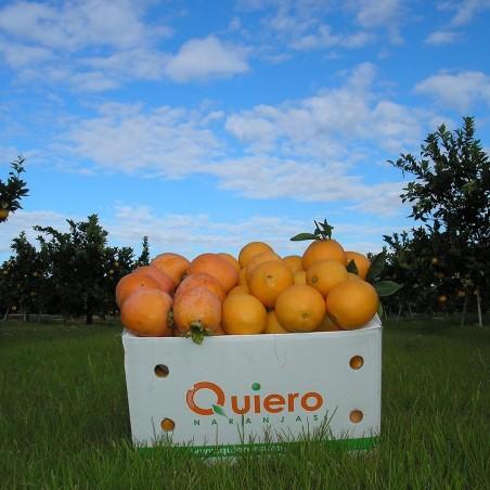 Naranjas Ecológicas Empapeladas Mesa 20 kg
