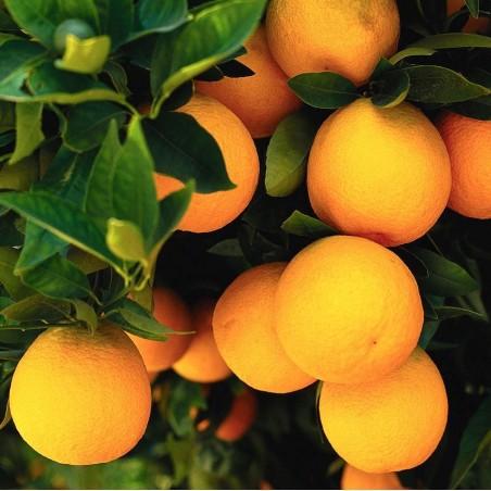 Organic Wallpaper Table Oranges 20 kg