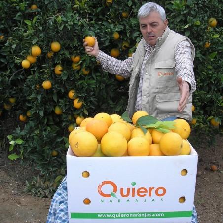 Oranges Bio de table enveloppées en papier de soie 20 kg