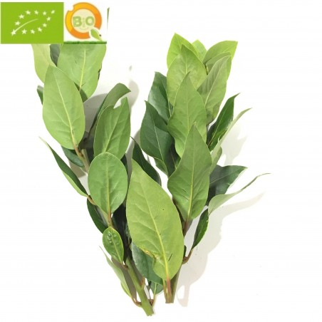 Bouquet garni of Bay Leaves fresh. (eco-friendly)