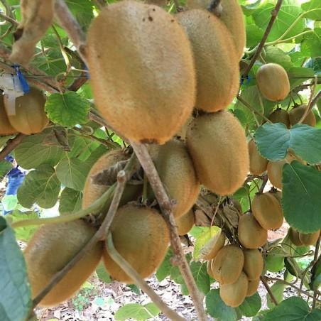 Organic Kiwis and Organic Mangoes 5 kg