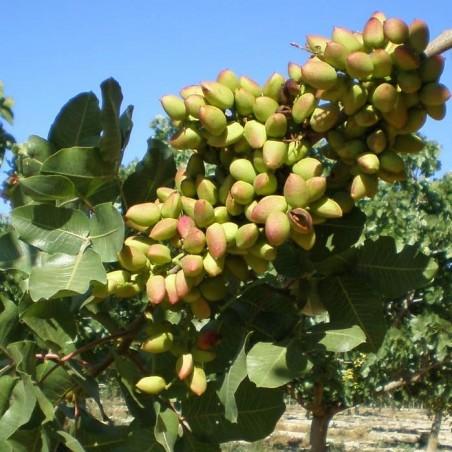 Pistaches écologiques d'Espagne 250 g