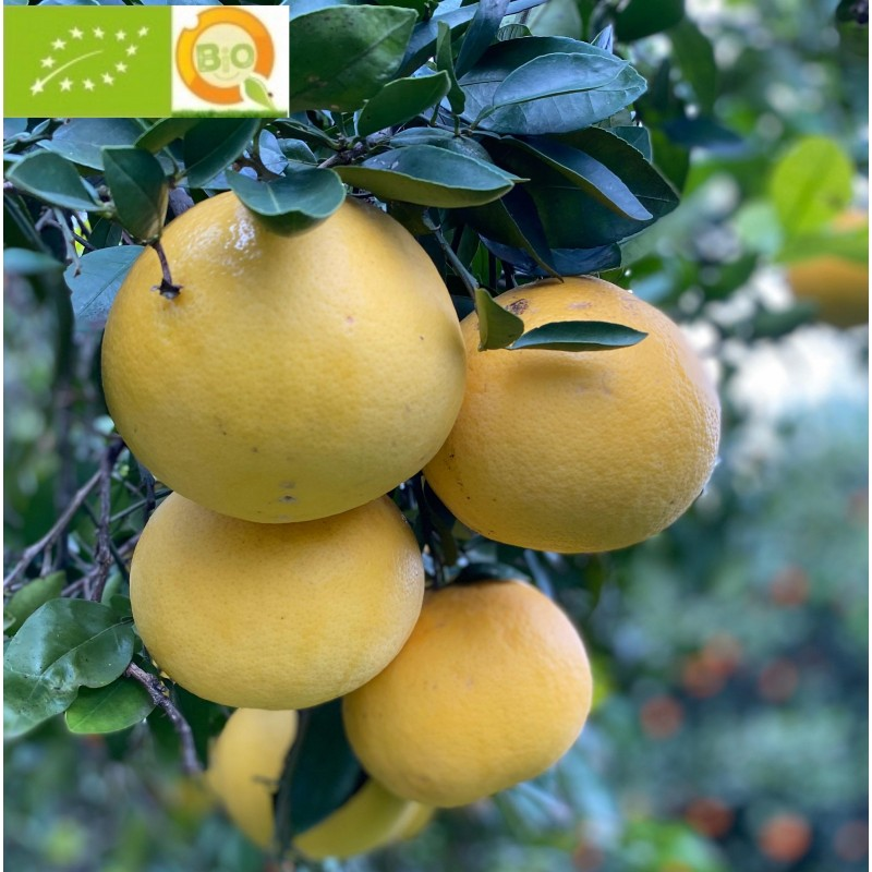 Grapefruit Yellow Green 5 kg