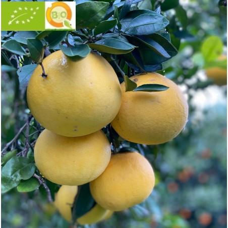 Pamplemousse écologiques jaune 5 kg (amarillos)
