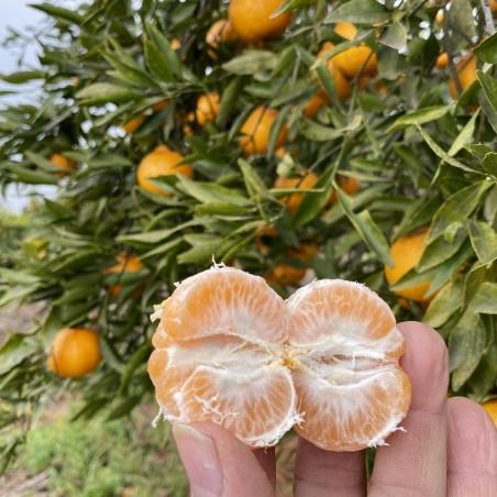 Mandarines variété Comuna 1 kg