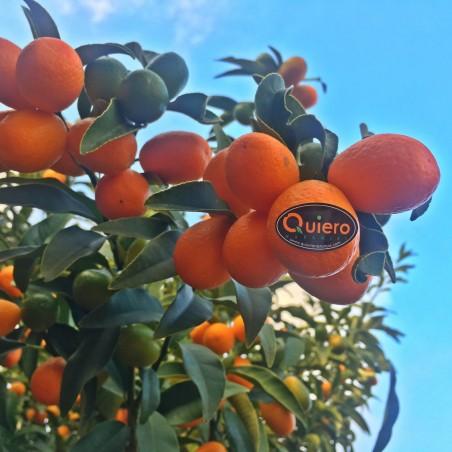 Kumquat écologique 1 kg