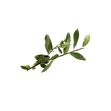 Mediterrane Bio-Lorbeerblätter