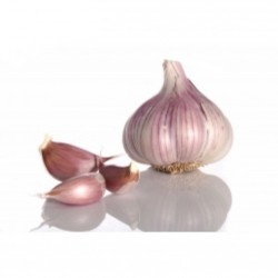 Garlic Purple 240-260 g...
