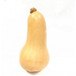 1 Bio-Butternut-Kürbis 0.8 -1.6 kg