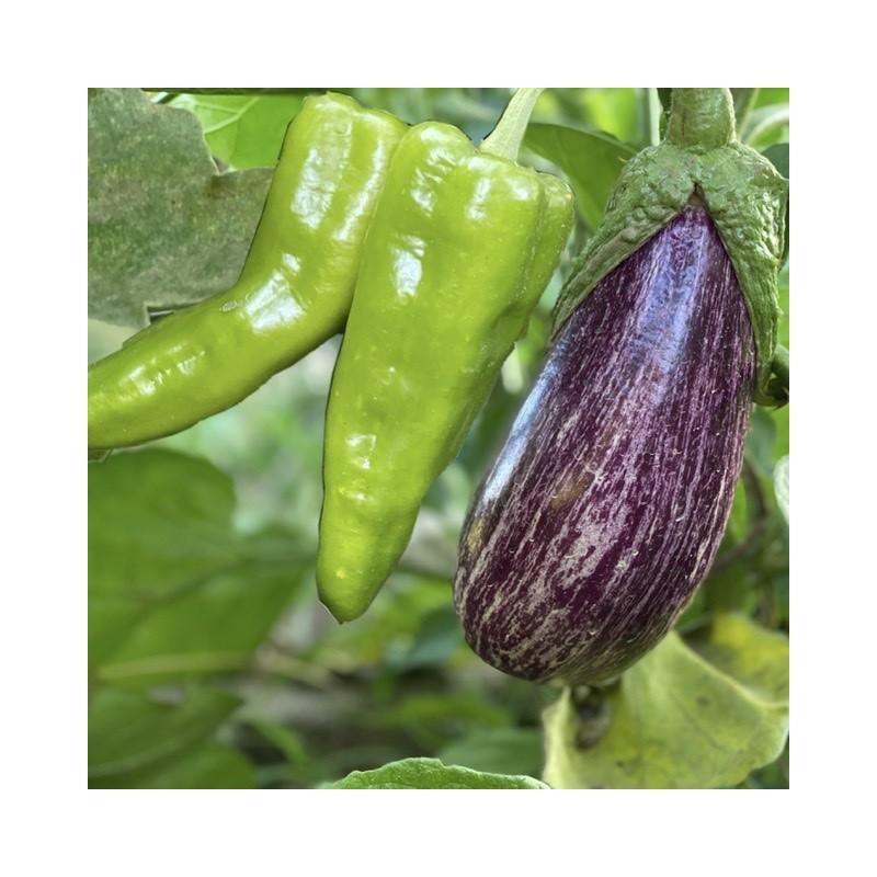 Aubergines et Poivrons verts Écologique -5 kg