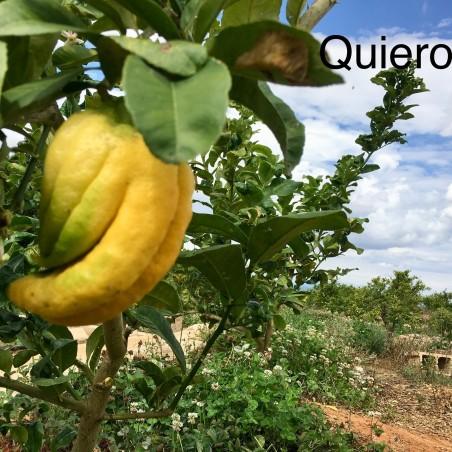 Main de Bouddha écologique 1 fruit,