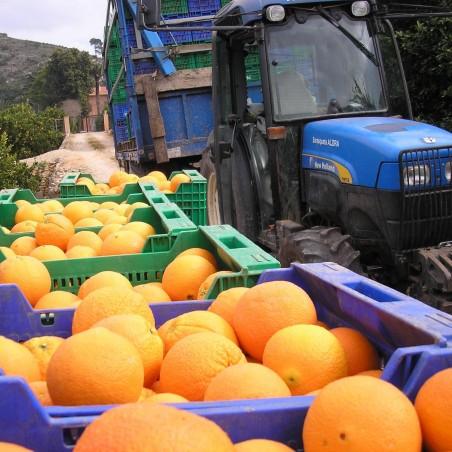 Oranges Table 20 kg