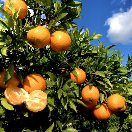 Mandarinas Ecológicas 5 kg