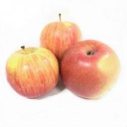 Äpfel 5 kg ökologischer...
