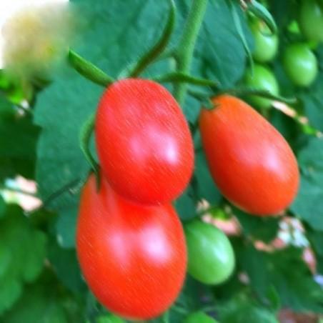 Cherry Tomato Pear 500 g