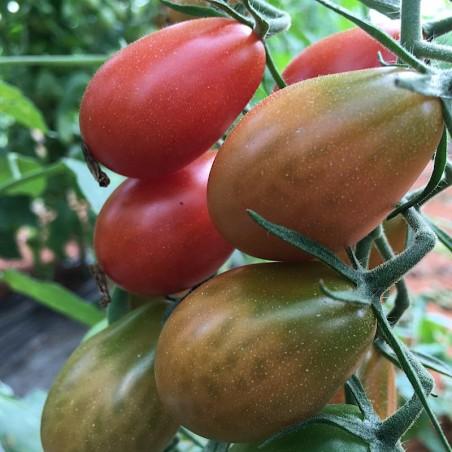 Tomate Cherry Pera 1 kg