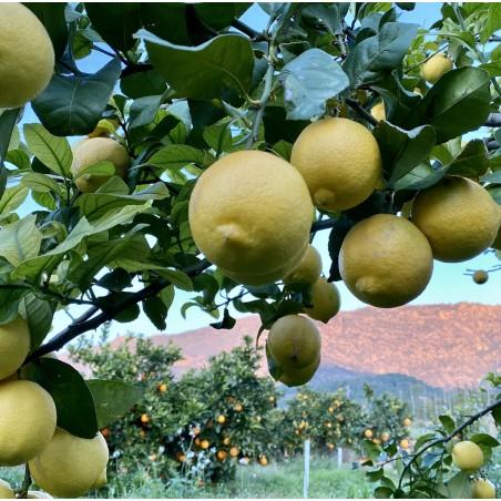 Fruits écologiques 4: Kiwis, Mangues, Plátanos Canaries et Citron  5 kg