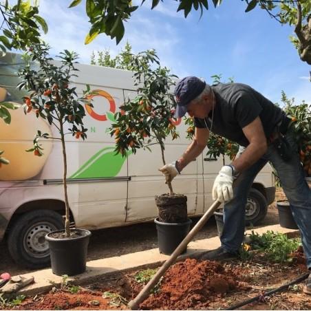 Kumquat Ecológicos 1 kg