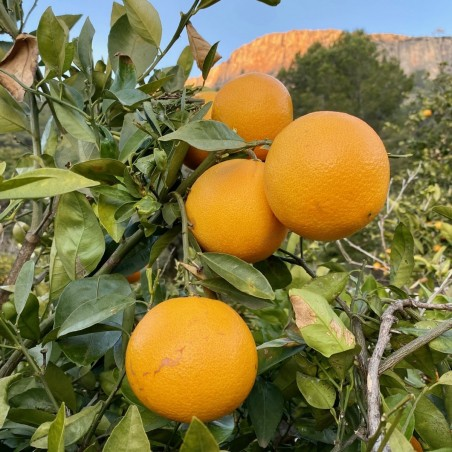 Oranges Bio de Table 2 kg, Mandarines Bio 1 kg, Kakis Bio  2 kg - 5 kg