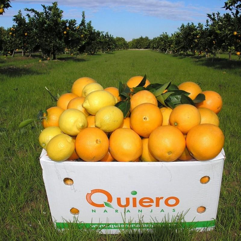 Oranges de Table 15 kg, Citrons 5 kg - 20 kg (écologiques)
