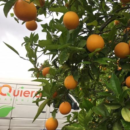 Bio-Tafelorangen 15 kg, Bio-Zitronen 5 kg (insgesamt 20 kg)(Naranjas y LIMONES)