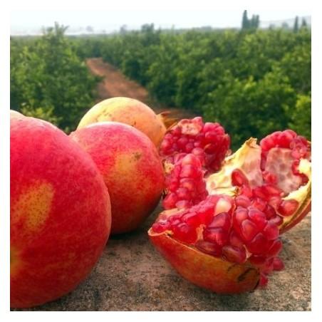 Bio-Mangos und Bio-Granatäpfel, insgesamt 5 kg