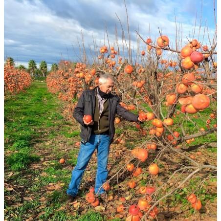 Bio-Kakis 3 kg, Bio-Granatäpfel 2 kg  (insgesamt 5 kg)