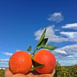 Oranges Sanguinelli 1 Kg