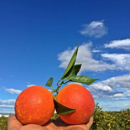 Naranja Sanguina 1 Kg