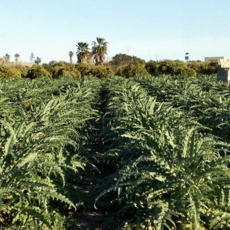 L'artichaut 5 kg (alcachofa)