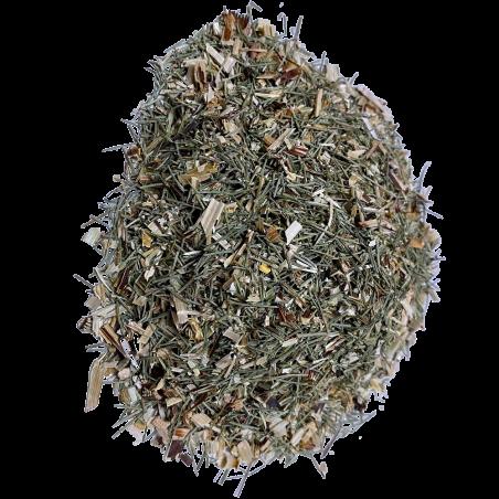 Bio-Schachtelhalm Schnittpflanze 50g (cola de caballo)