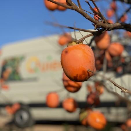 Zumo de Kaki, Naranja y Mandarina 1L
