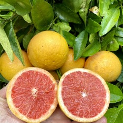 Grapefruits Star Ruby 10 kg