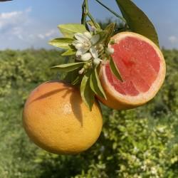 Grapefruits Star Ruby 5 kg