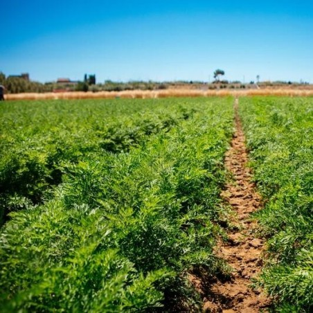 Carotte biologique 500 g (zanahoria)