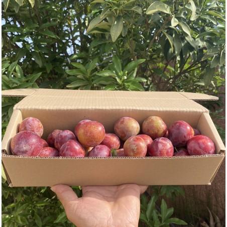 Erdbeere Rote Pflaume 1 kg (ciruelo)