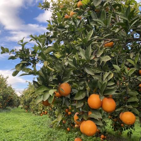 Hojas de Naranjo Ecológicas 70 g