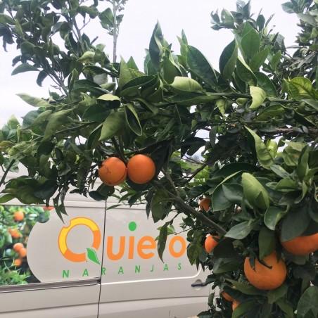 Organic Orange Tree Leaves 70 g