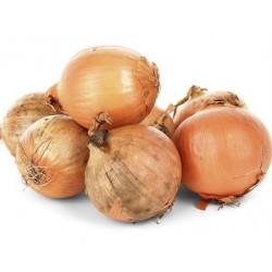 Organic Onion 5 kg (cebollas)