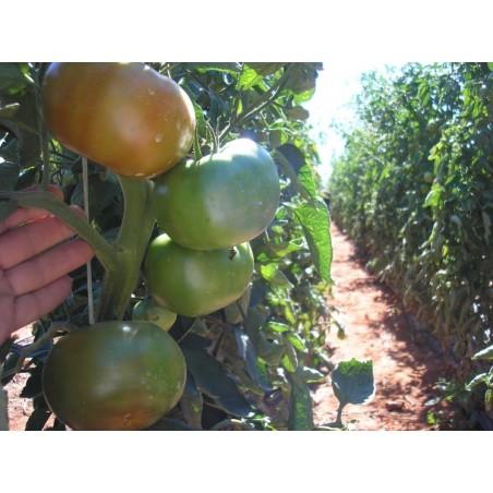 Tomatoes Salad 5 kg