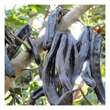 Johannisbrot aus Valencia 500 g (algarroba)