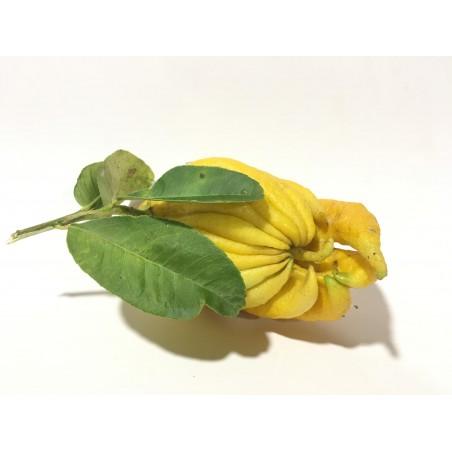 Hand of Buddha - 1 fruit,
