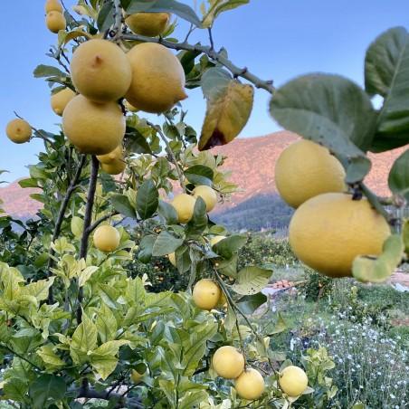 Limones 20 kg