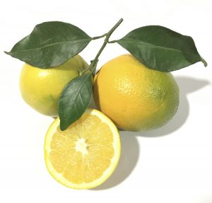 primeras naranjas.