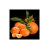 Boîtes mixtes orange Bio